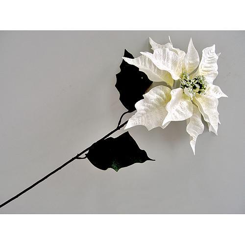 f31895ad6b3a4 Kvet Poinsettia 75, krémová, stonka, 23x75 cm, bal. 12 ks Akcia